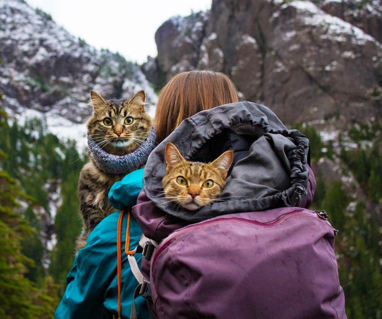 Afbeelding van Dit kattenduo reist vaker dan jij