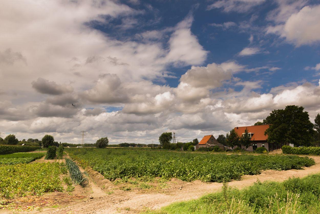 Landschap Hoeksche Waard Door Riekelt Hakvoort