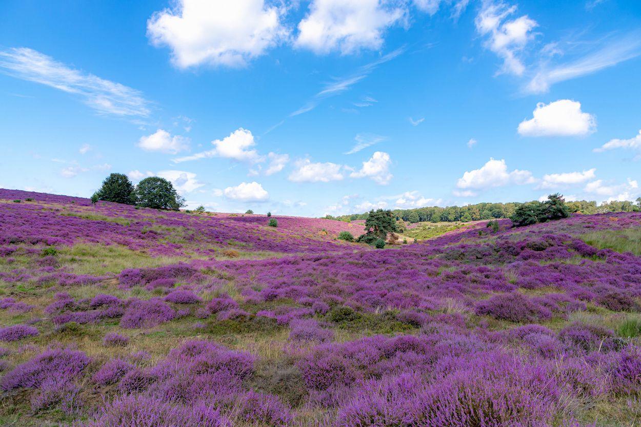 Afbeelding van Dit zijn jullie mooiste verborgen plekken in Nederland