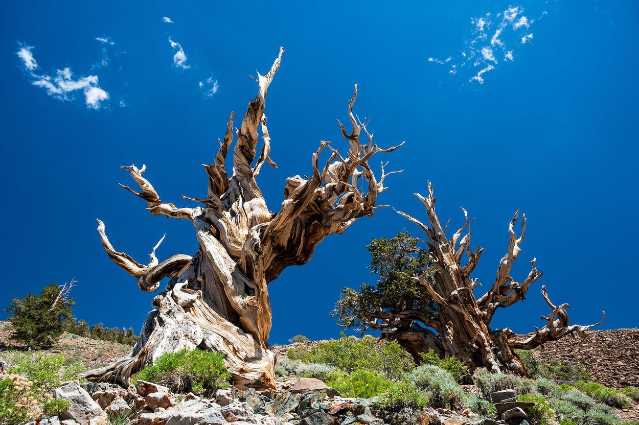Afbeelding van Hier vind je vijf van de oudste bossen ter wereld