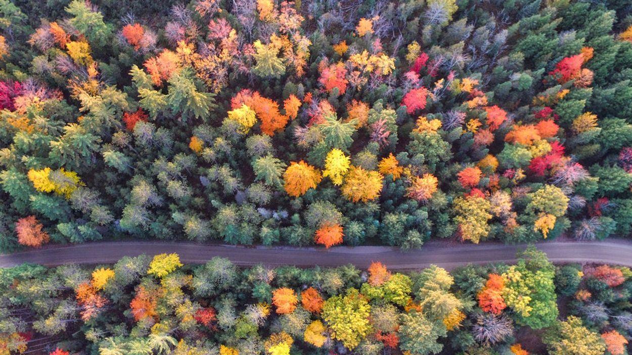 Afbeelding van Magische herfstkleuren toveren élke plek om tot waar sprookjesbos