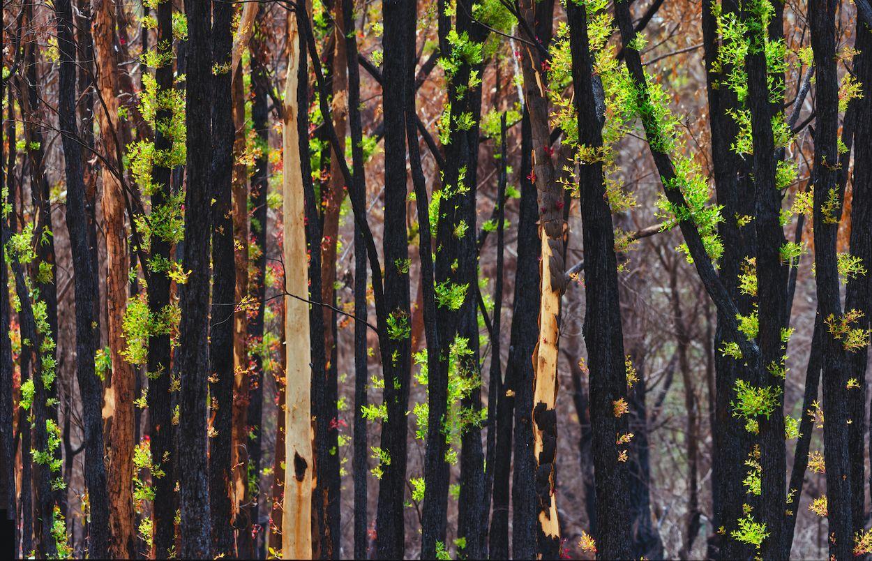 Afbeelding van Hoe gaat het nu eigenlijk met de bosbranden in Australië?