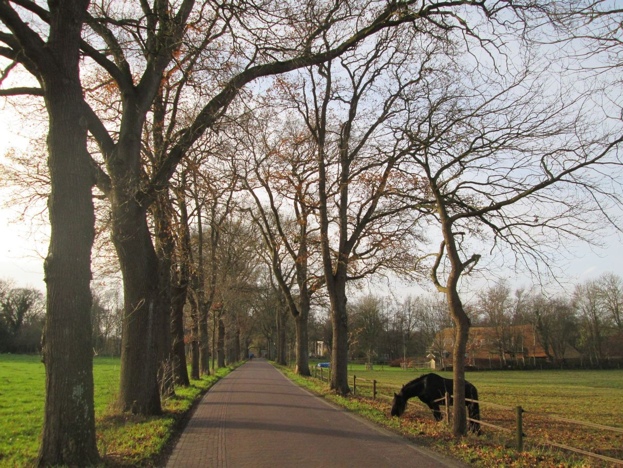 Lhee Drenthe door Henk-Jan van der Klis