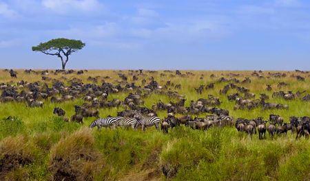 Afbeelding van Kenia