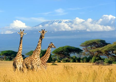 Afbeelding van Afrika