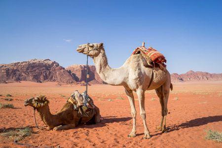 Afbeelding van Midden-Oosten