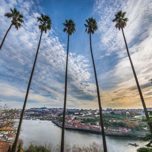 Afbeelding van De tuinen van Porto: een groene oase aan de rand van de stad