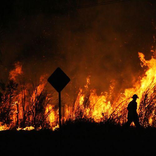Afbeelding van Dieren met uitsterven bedreigd door bosbranden in Australië