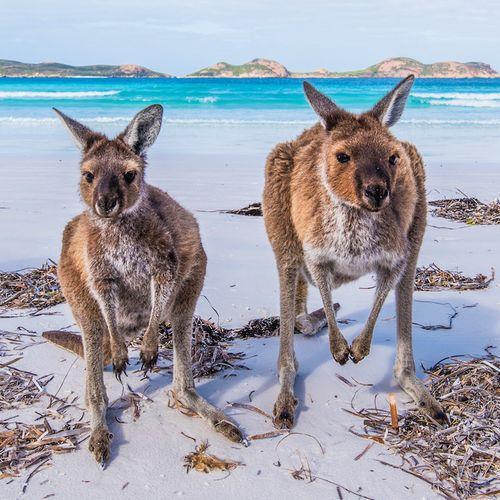 Afbeelding van Ontdek Australië met deze alternatieve route door het zuiden