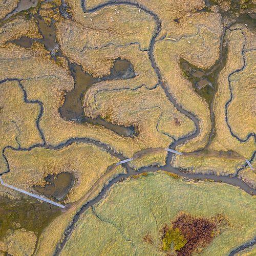 Afbeelding van Worstel enkeldiep door de modder in dit 'Verdronken Land'