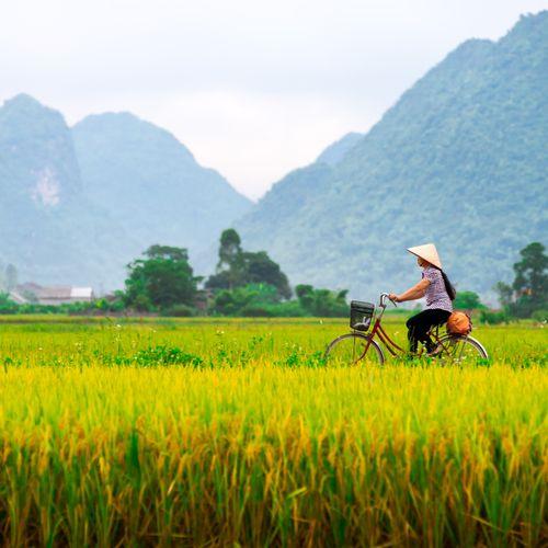 Afbeelding van In dit land vol scooters vind je onverwacht prachtige fietsroutes