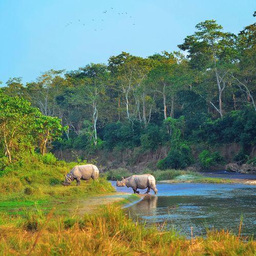 Afbeelding van Chitwan National Park