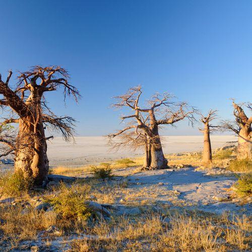 Afbeelding van Makgadikgadi National Park