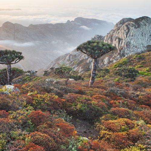 Afbeelding van Socotra