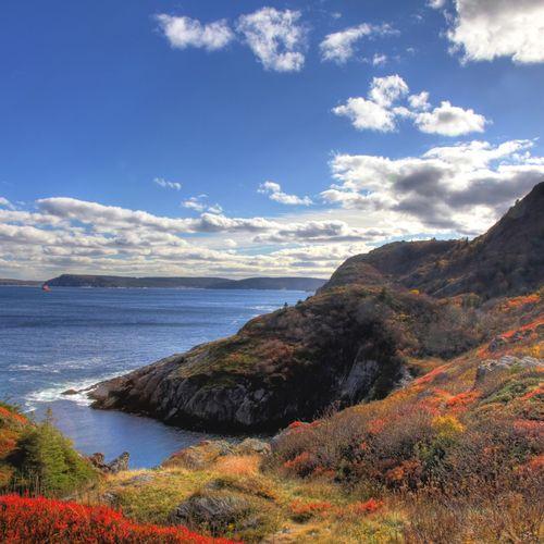 Afbeelding van Newfoundland
